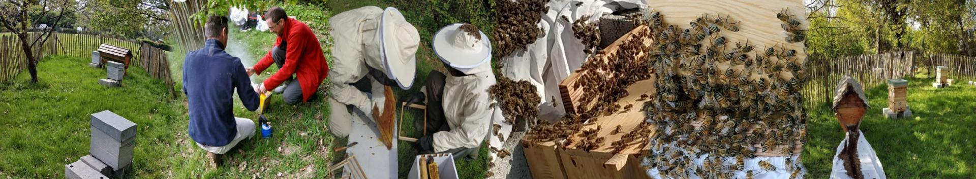 Rucher des Gayeulles: Transvasement de 3  ruchettes Dadant en ruches warré et kényane.