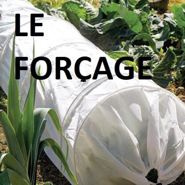 Forcage