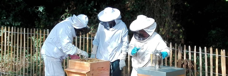 Première récolte de miel à la TAUVRAIS